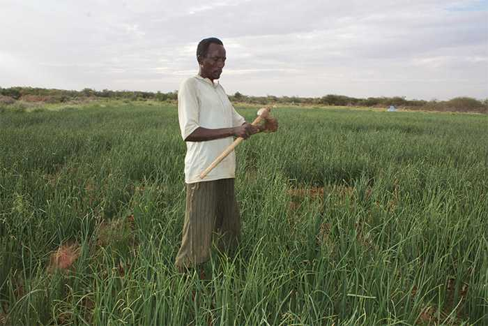 New farming methods help Ali become self-reliant and save his livelihood assets.