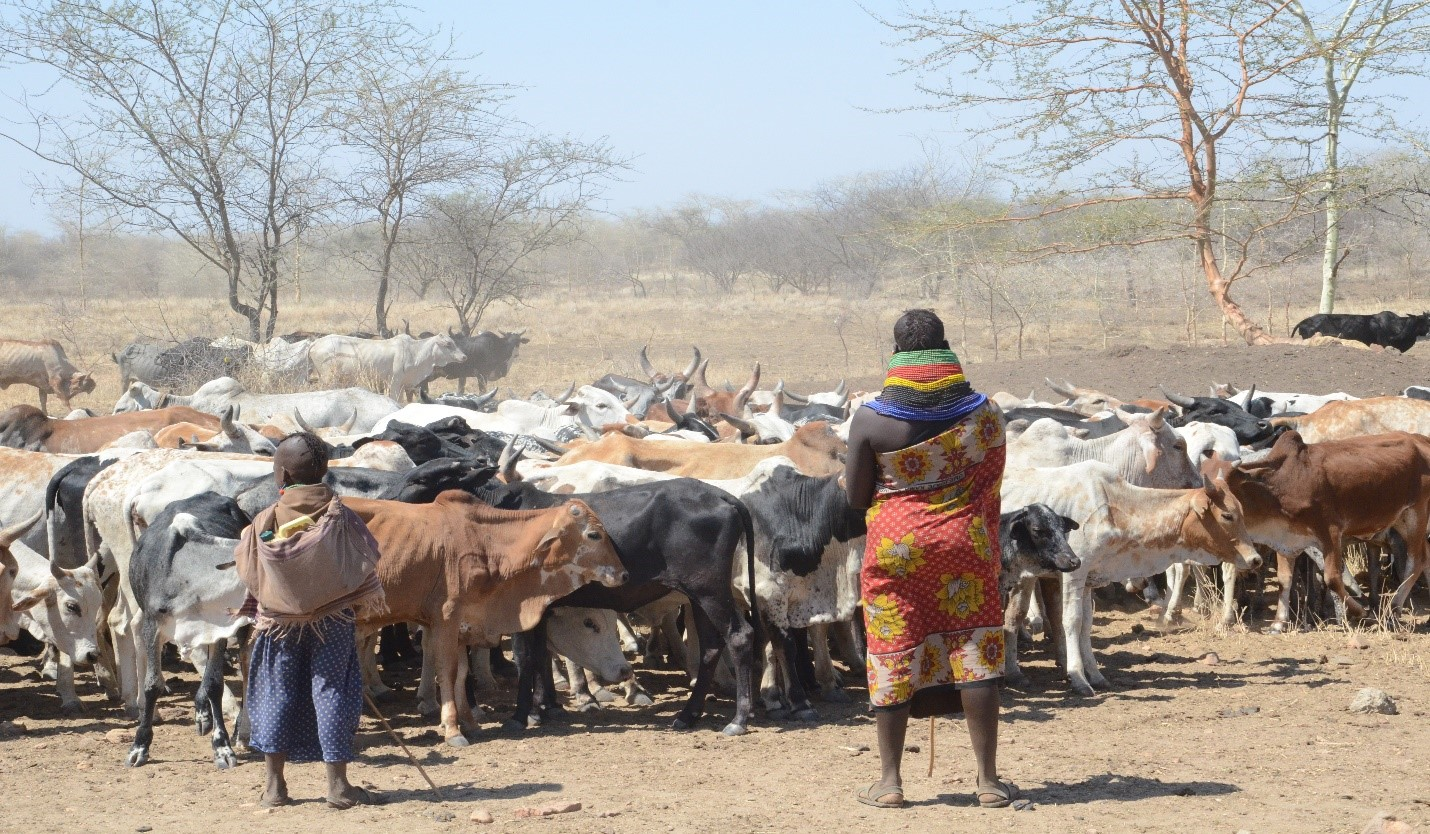 Turkana, Karamojong pastoralists appeal for establishment of regional institutions