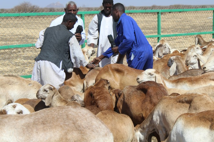 Drought Resilience and Sustainable Livelihoods Programme in The Horn of Africa (DRSLP)